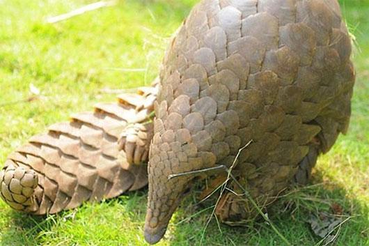 Loài động vật có lưỡi dài nhất hành tinh