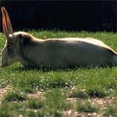 1/5 loài động vật đứng trước nguy cơ tuyệt chủng