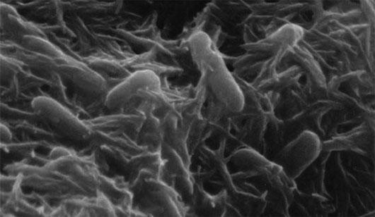 Vi khuẩn có khả năng tạo ra điện năng