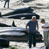 Hàng loạt cá voi chết bí ẩn trên bãi biển Tây Ban Nha