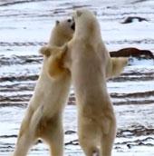 Video: 20 loài động vật giết người trong chớp mắt