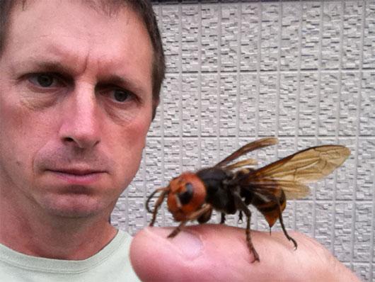 Sự trỗi dậy của ong bắp cày