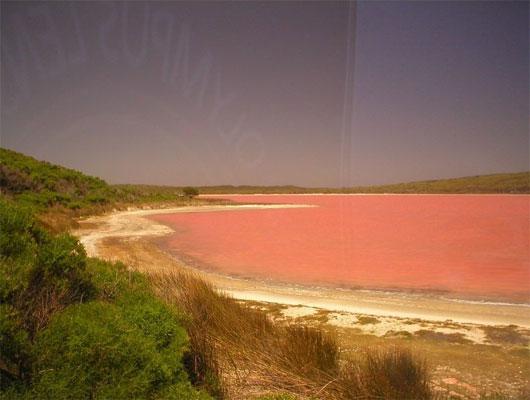 Hồ nước chuyển hồng là hiện tượng lạ khiến mọi người tò mò