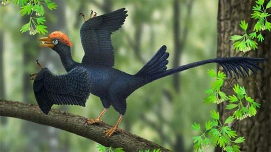 Loài chim có 2 đuôi