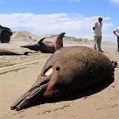 Bí ẩn chưa thể giải mã về bãi biển chết chóc hàng loạt