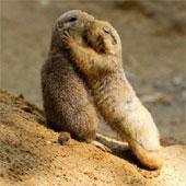 Những điều chưa biết về ngôn ngữ động vật