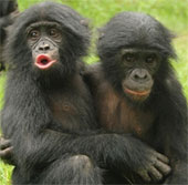 Khỉ biểu lộ cảm xúc như con người