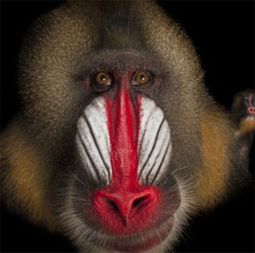 """5 loài động vật kỳ lạ có chiếc mũi """"chẳng giống ai"""""""