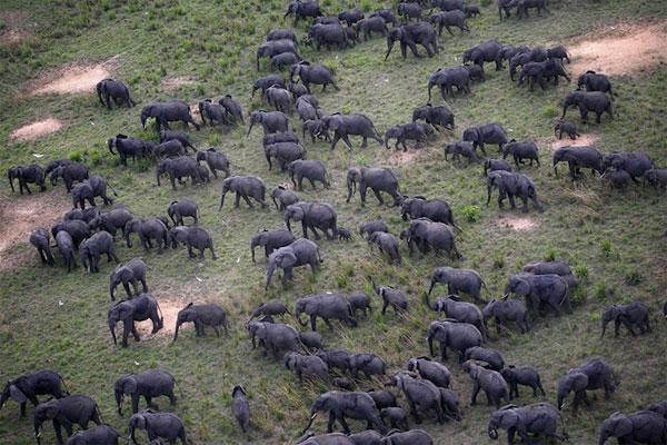 Những cuộc tụ họp ấn tượng của các loài động vật