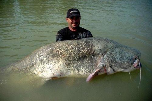 Những con vật lớn nhất hành tinh