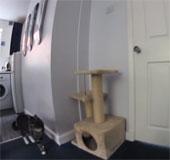 Video: Sự kết hợp ăn ý giữa chó và mèo