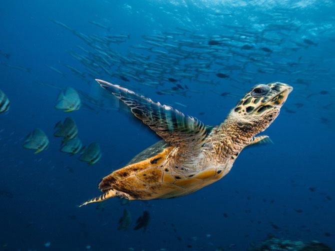 Thiên đường đẹp khó tin dưới lòng đại dương
