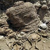 Hai xác ướp nguyên vẹn 1000 năm tuổi