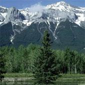 Thực vật lên núi tránh tác động hiện tượng nóng lên toàn cầu
