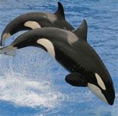 10 loài động vật mới được phát hiện