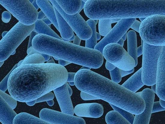 Vi khuẩn có già đi?
