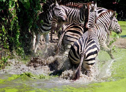 Thái Lan: Nước lụt tấn công công viên động vật hoang dã
