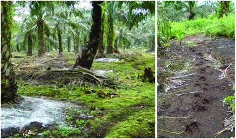 Nhiên liệu sinh học từ thực vật tương đương nhiên liệu hóa thạch