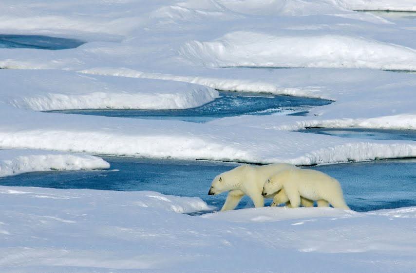 """Băng ở Bắc Băng Dương """"sắp biến mất"""""""