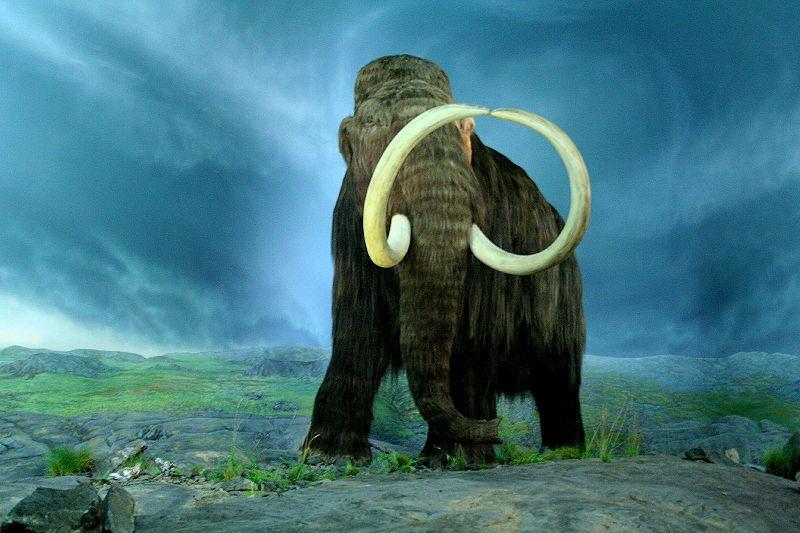 Động vật hữu nhũ tuyệt chủng do tác động của biến đổi khí hậu và con người