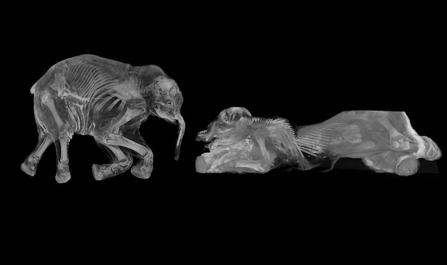 Phát hiện mới từ hóa thạch hai con voi ma mút