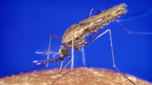 Đuổi muỗi bằng bức tường hồng ngoại