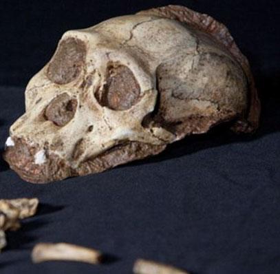 Phát hiện bộ xương có da 1,9 triệu năm