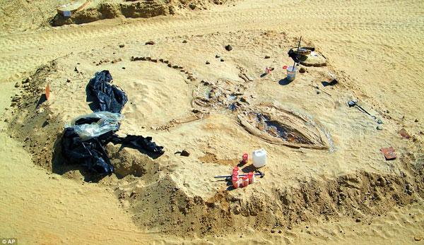 Một bộ hài cốt cá voi tiền sử được tìm thấy trong sa mạc ở Chile