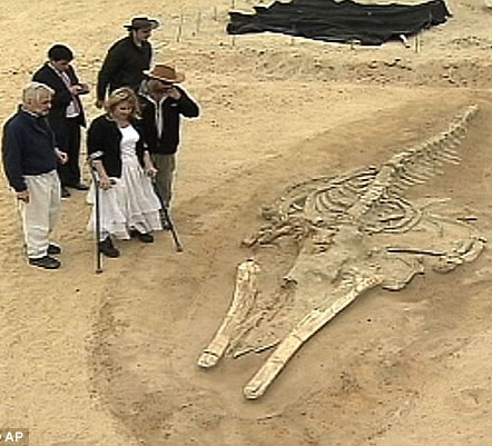 Phát hiện nghĩa địa của 75 con cá voi trong sa mạc