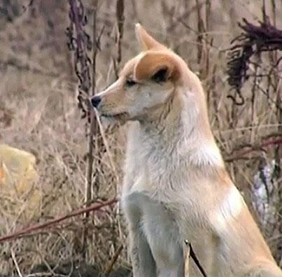Trung Quốc: Cảm động chú chó nằm lỳ bên mộ chủ