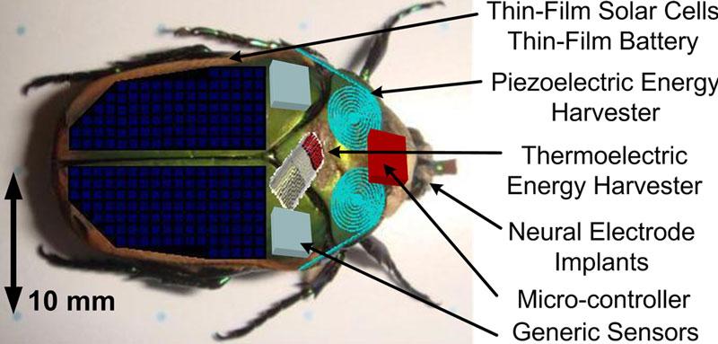 Các thiết bị giám sát môi trường gắn trên côn trùng sẽ giúp phát hiện ra các địa điểm nguy hiểm