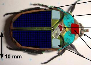 Robot côn trùng thám hiểm môi trường