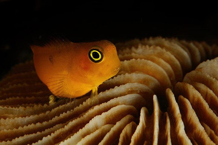 Tác phẩm đoạt giải nhất cuộc thi ảnh dưới nước Raja Ampat 2011.