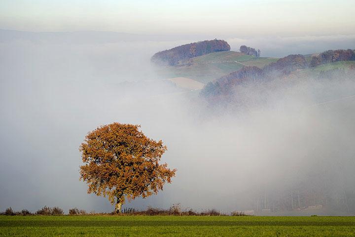 Lá cây đổ vàng trong sương sớm mùa thu ở Sarzens, Thụy Sỹ.