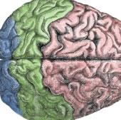 Não cũng điều khiển các thói quen