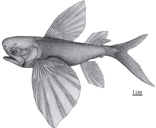 Hóa thạch cá Potanichthys xingyiensis