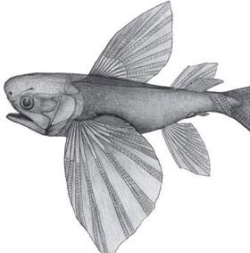 Phát hiện cá bay cổ nhất trên thế giới ở Trung Quốc
