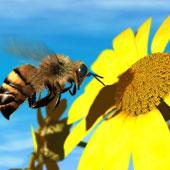 Ong mật biết thưởng lãm tranh