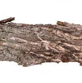 Tạo bọt từ gỗ