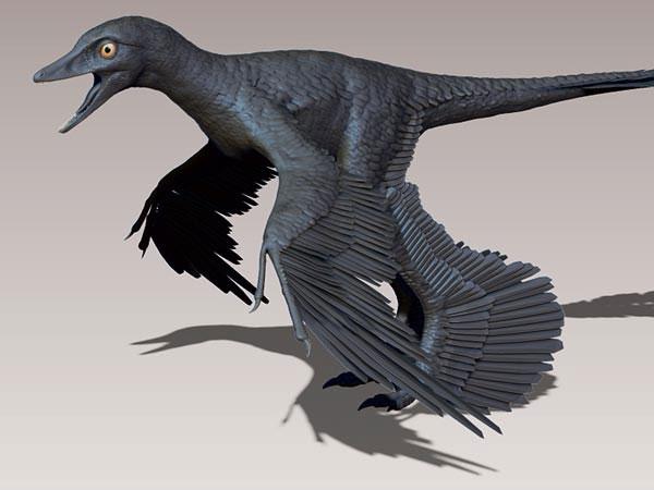 Loài khủng long dromaeosaur có bốn cánh