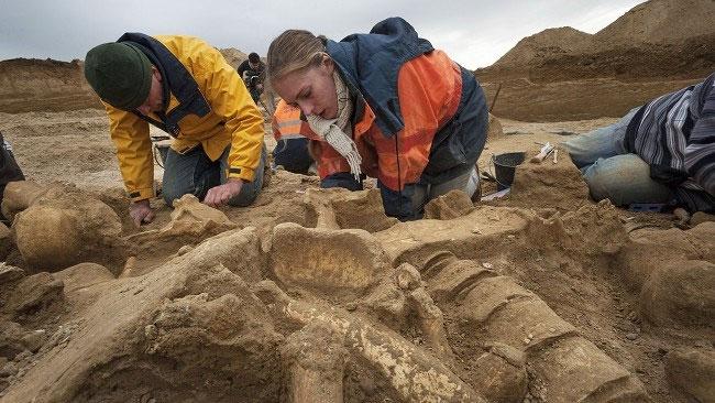 Bộ xương voi ma mút có niên đại từ 200.000 tới 500.000 năm và hầu như nguyên vẹn.