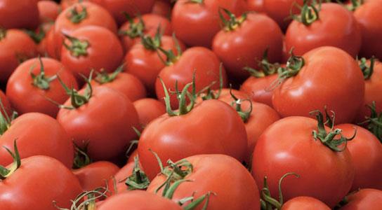 Loại cà chua biến đổi gene có thể ngăn được bệnh tim