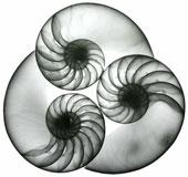 Những bức ảnh tuyệt đẹp chụp bằng tia X