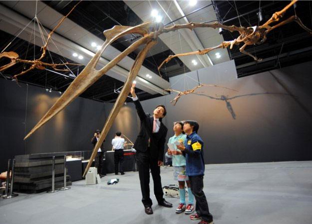 Bộ xương khổng lồ của Quetzalcoatlus