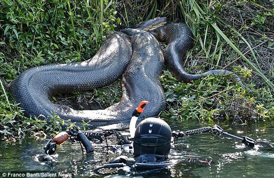 Nhiếp ảnh gia Banfi lại gần và chạm vào con trăn khổng lồ khi nó đang nằm phơi nắng ven sông