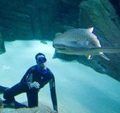 Không mang đồ bảo hộ vẫn bơi cùng 25 con cá mập