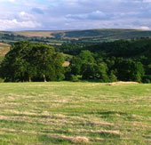 Loài người ăn cỏ như bò từ 3,5 triệu năm trước