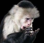 """Bộ ảnh """"Cảm xúc của động vật"""" nổi tiếng thế giới"""