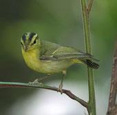 Phát hiện một số loài chim quý hiếm ở Phong Nha - Kẻ Bàng