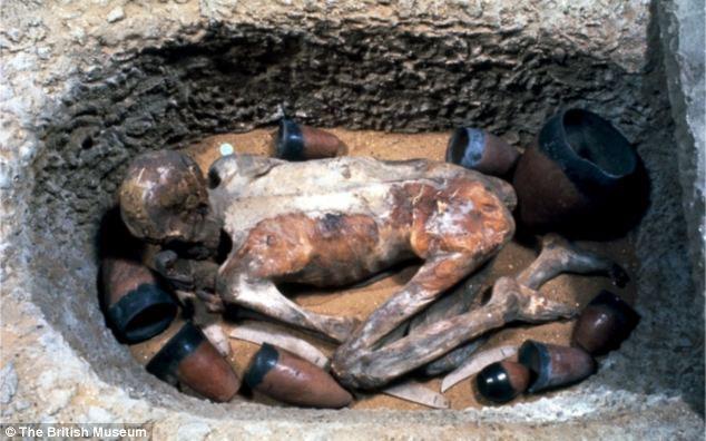 Xác ướp Ginger đang được trưng bày tại bảo tàng Anh.